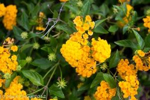 Mackay Harbour Flowers