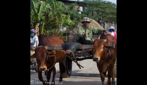 Ox Cart in Phan Rang